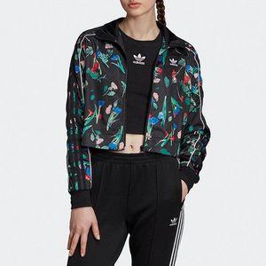 adidas Originals Trefoil Bluza Zielony obraz